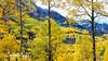 Aspens Near and Far - Owl Crk Pass