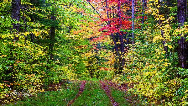 White Mtn Nat'l Forest