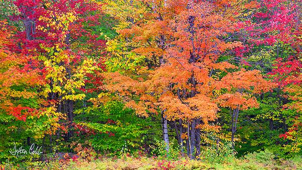 White Mtn Nat'l Forest - NH