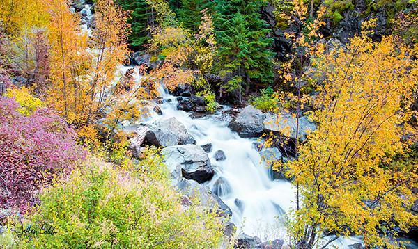 Creek - Uncompahgre Nat'l Forest