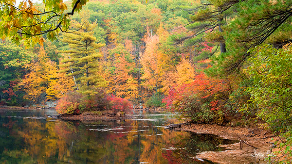 Leominster State Forest Massachusettes