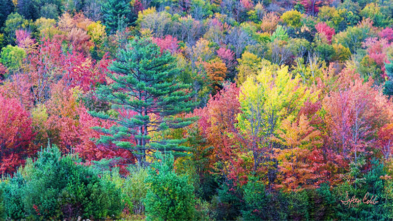 Near Upton, Maine <br /> Classic New England Hillside<br /> Time of day:  Midday, thin overcast <br /> October 6, 2017  <br /> <br /> Here's a pleasant scene found in Maine's interior.   We were driving in the countryside taking in the peak fall colors, and of course scouting photo ops, when we were taken aback by this hillside as we traversed a small valley.   <br /> <br /> Being in somewhat of a rush, this was really just a quick handheld grab shot.   It was quite windy.  <br /> <br /> There was an unattended/honor system roadside pie shop ahead on the roadway.  We picked up a homemade blueberry pie on the return drive.  Good stuff, I guess Maine is known for its blueberries. <br /> <br /> Thought we would get a chance to reshoot this area but by the time we returned the character of the light had changed dramatically, no more thin overcast filtering the harsh sunlight.  It was quite a distance from the hotel so we didn't get back this way. <br /> <br /> Shot with the lens wide open (f4) at ISO 800 to compensate for the wind and no tripod.  No filters.