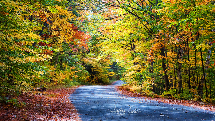 Near New Hampshire-Maine Border<br /> White Mountain National Forest - Maine<br /> Mid-morn, 3 hrs after sunrise<br /> October 17, 2015<br /> <br /> We were really impressed by the scenery on this back road in Maine.  I recall wondering if the overall feeling would come through on the images as we photographed.  <br /> <br /> I believe there are indeed times when our senses pick up things that cannot be picked up by the camera, things like the sound of the wind rustling through the trees, the impact of smells emanating from the various plants and the feeling of enjoying the scene in real time as the light changes.  In the past I can recall photographing somewhere and being awestruck at the scene; yet in viewing the resulting images I wondered what I saw there that was worth photographing.<br /> <br /> In viewing this image, it feels like about half the experience of being there is recorded here -- and it still ain't bad. <br /> <br /> The wind was blowing and colorful leaves were falling everywhere. I recall thinking that I wished we had brought along some food so we could have a makeshift picnic.<br /> <br /> This is a classic New England back road at peak fall color that was truly fun to experience.