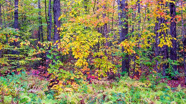 White Mtn Nat'l Forest Scene