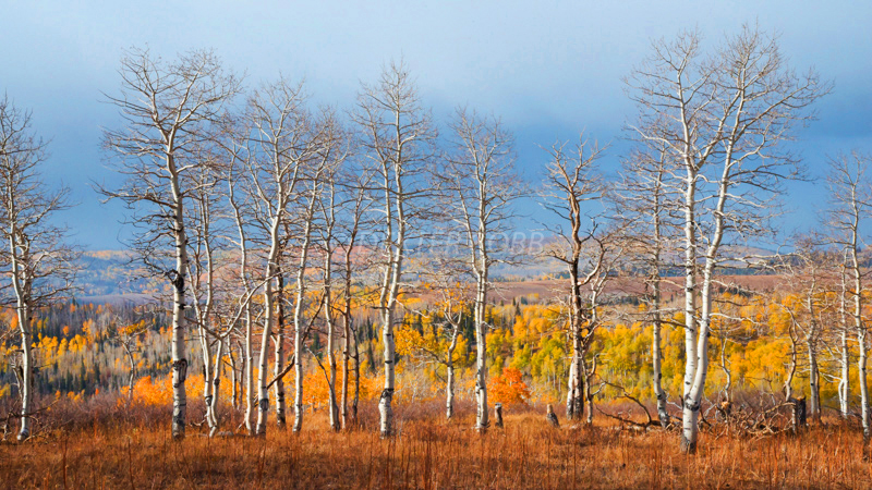 Manti-La Sal Natl Forest