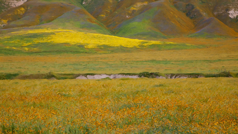 Wildflowers near Shandon<br /> Time of day:  Morning, 2 hours after sunrise<br /> March 21, 2010<br /> <br /> Casse and I took a weekend trip to California's Central Coast in search of wildflowers.  We didn't have much luck finding wildflower scenes that lent themselves readily to landscape photography until we were heading back home when we encountered this scene on Highway 46. <br /> <br /> I had heard great things about Hwy 58 in San Luis Obispo (SLO) County so we proceeded south from Fresno on Hwy 99 to Bakersfield and west on Hwy 58 across the Temblor Range into SLO County.  Hwy 58 can be treacherous with a couple of 90 degree turns on short notice.  An Ol' Timer had warned us that many deaths were attributed to these sharp turns so we were prepared for them.<br /> <br /> But we were not prepared for the ho-hum wildflower show.  I guess the folks that rant and rave about this highway (58) have enjoyed the beauty without having to compose a compelling landscape photo.  Who knows, maybe this was just not that good a year for flowers in this area or perhaps we were too early for the show. <br /> <br /> Ah but the Central Coast boasts of many wineries and fine restaurants so we enjoyed wine-tasting and eat well.  <br /> <br /> While driving back to Fresno on Sunday morning we encountered this hillside on Hwy 46 as we passed through the Coast Range near Shandon, California.  <br /> <br /> I love the many colors in this scene but the blues and magentas seem to bring it together for me.<br /> <br /> No filters were used in this shot.  Taken on an overcast day and processed with impressionist filter.  In my view, the impressionist filter essentially blurs the image and basically makes us step back and enjoy the overall scene.