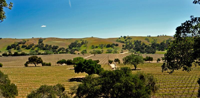3-23-15 Firestone Vineyard