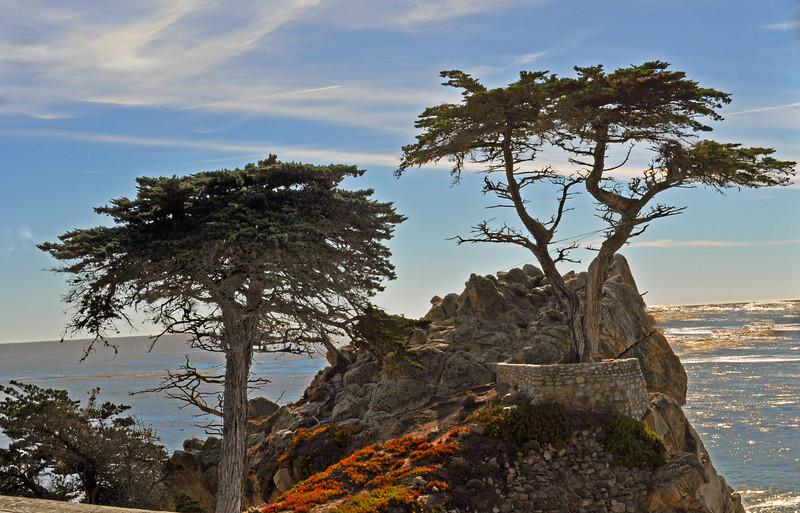 Lone Cypress 2