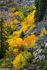 Tumwater Canyon Color 10-2014