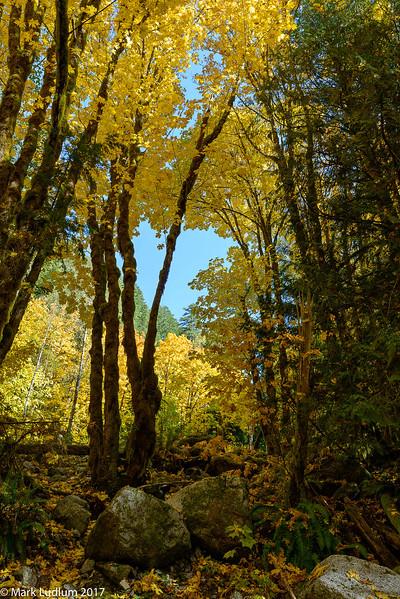 Mountain Loop HGWY Fall 1 10-2017