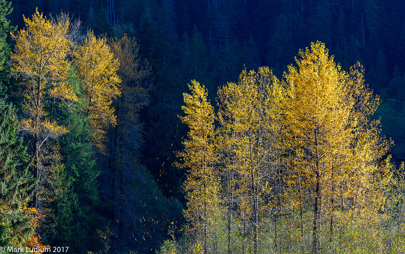 Mountain Loop HGWY Fall 3 10-2017