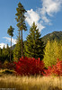 Icicle Creek Fall Color 10-2017