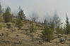 Fire burning on hillside South of OR-218, Just east of US-97 between Antelope & Madras Oregon, is driven by a stiff wind into scattered Trees