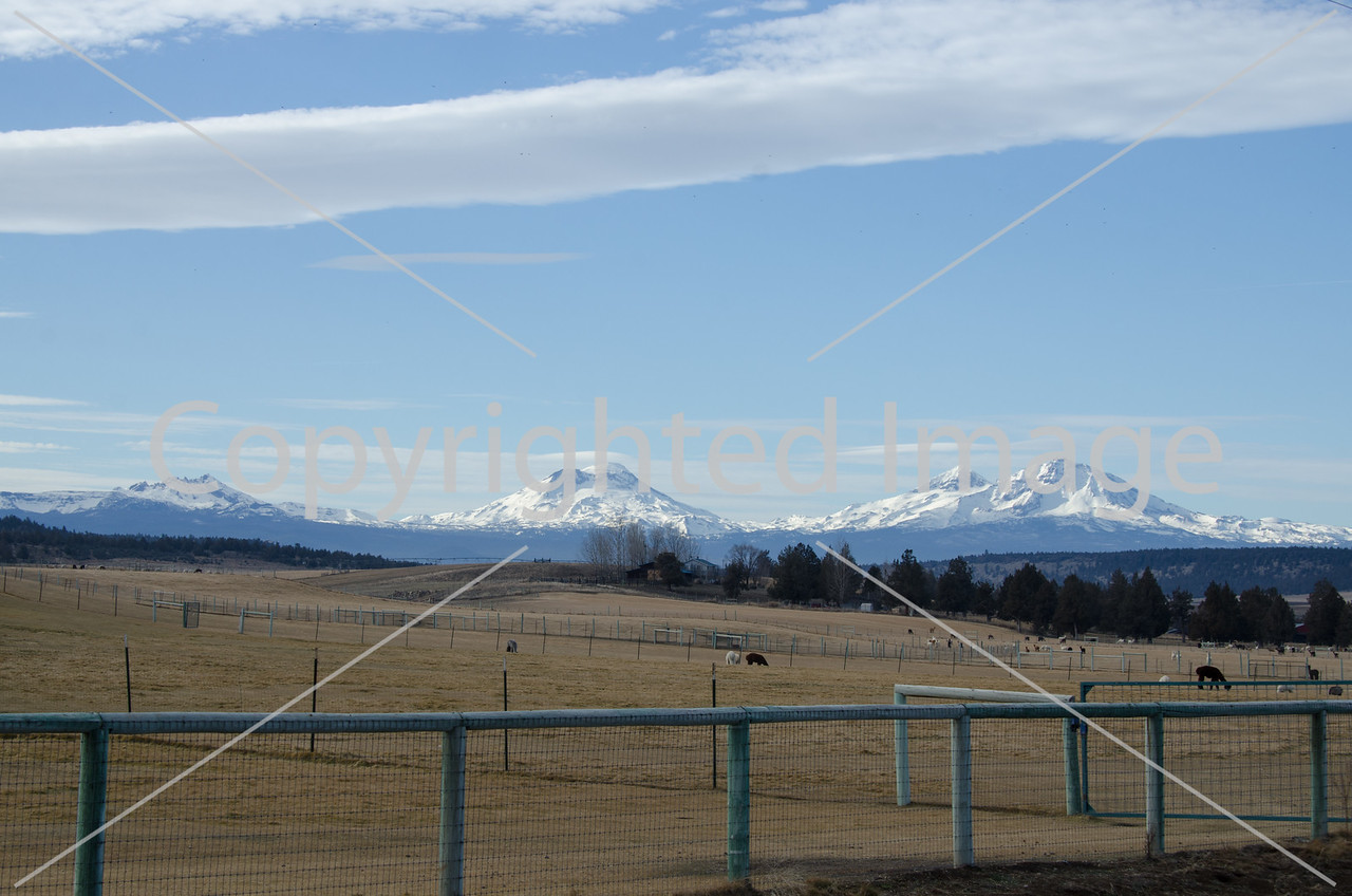 A view of the Three Sisters Mountains in the Cascade range of Oregon with a Llama farm in the foreground