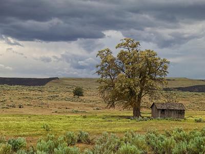 Old Cabin near Sherar's Falls