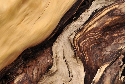 Twisted Juniper, Mitchell Oregon
