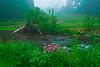 Pennsylvania, Centrtal,  Wild Flowers, Fog, Spring Landscape, 宾夕法尼亚 田园, 风景