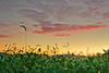 Pennsylvania, Penns Valley, Sunrise, Farmland Landscape, 宾夕法尼亚 田园, 风景