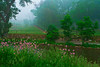 Pennsylvania, Centrtal,  Wild Flowers, Fog, Spring Landscape 田园, 风景