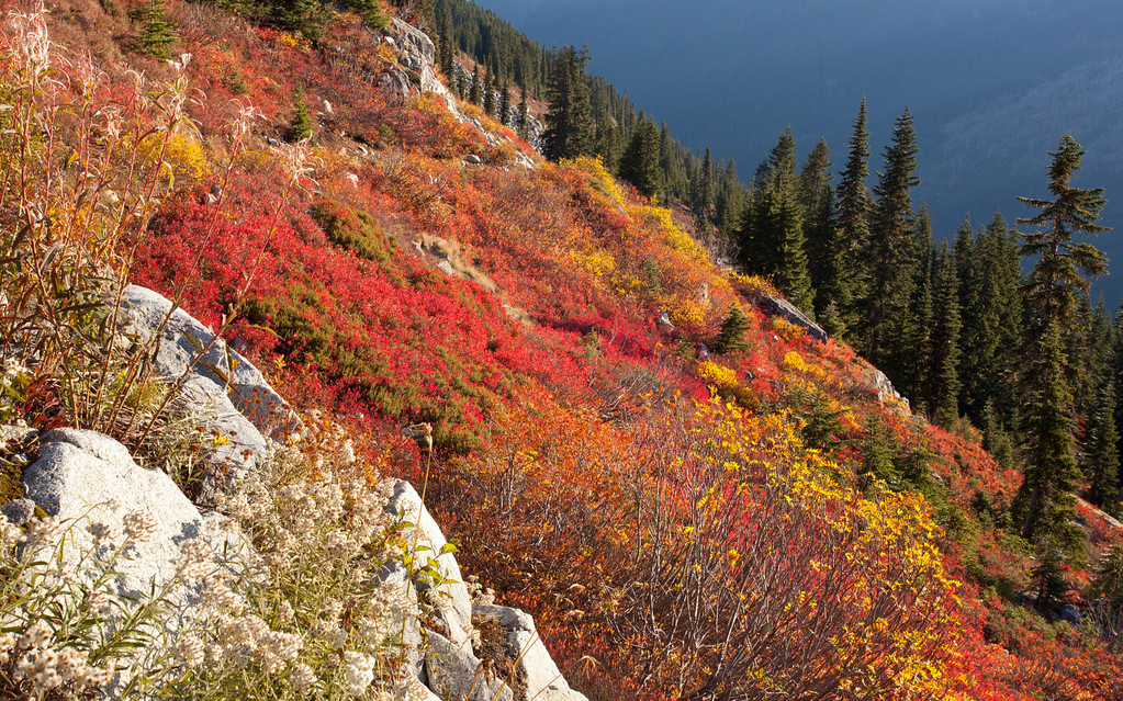 Fall color on the 'Backside' of Stevens Pass