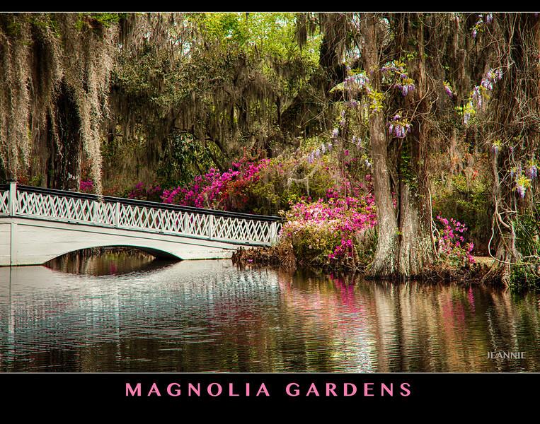 Magnolia Gardens on the Ashley River.