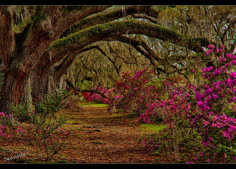 Oaks at Magnolia Gardens