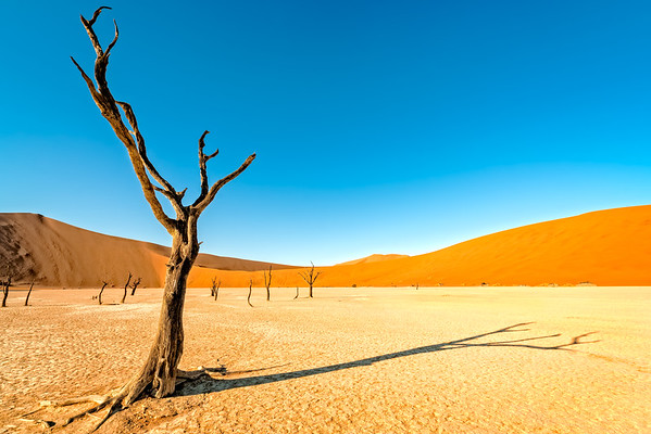 Dance of the Dead Vlei