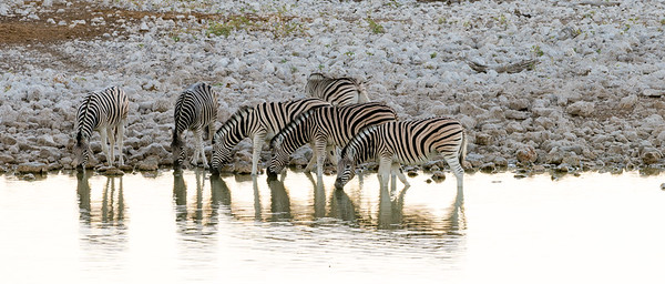 Contrasts of wildlife & light in Etosha National Park