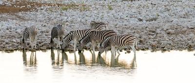 Contrasts of wildlife & light in Etosha National Park
