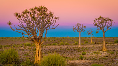 In the company of Ancients in Southern Namibia