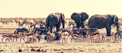 Speechless in Etosha National Park