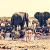 Speechless in Etosha National Park