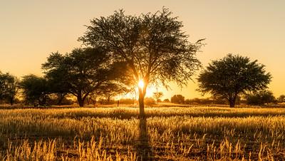 A Kalahari Sunrise