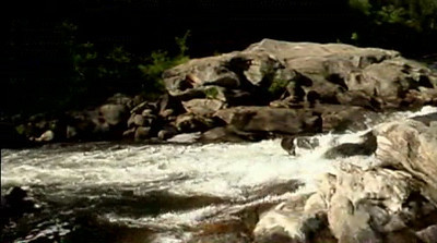 Chattooga River Rapids Video