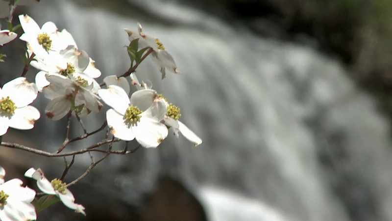 Video of Dogwoods at Oconee County's Chau Ram Park
