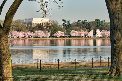 The Lincoln and MLK Memorials with cherry trees at peak.