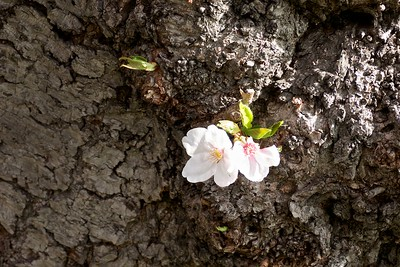 Blossoms in a tree trunk.