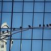 Birds hanging around, taken on my way to work