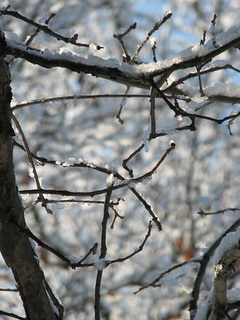 Chicago Winter 2006