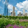 Chicago  61