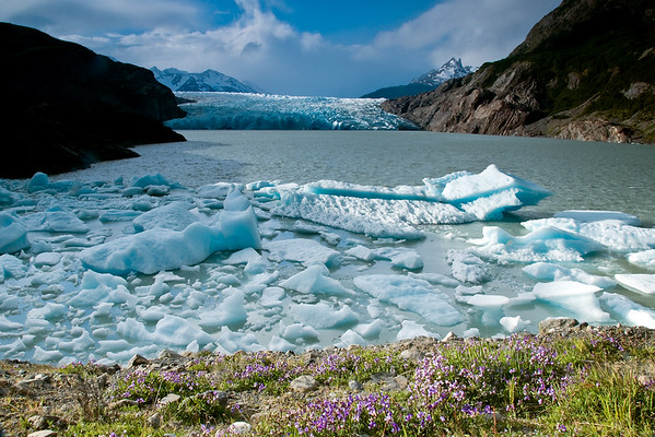 Icebergs collect in a bay after calving from Glacier Grey.