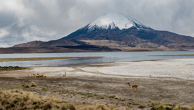 Vicuna's and the Volcano