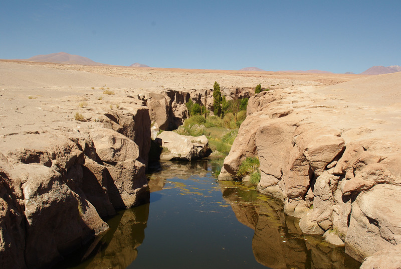The driest desert in the world offers refreshments