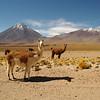 Lliancabur+Lamas