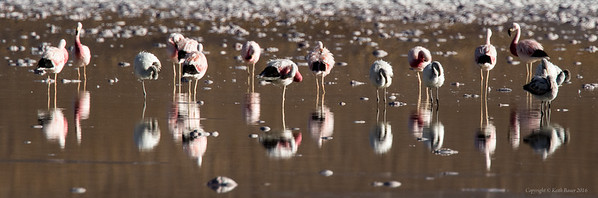 Flamingos & Reflections in the morning light