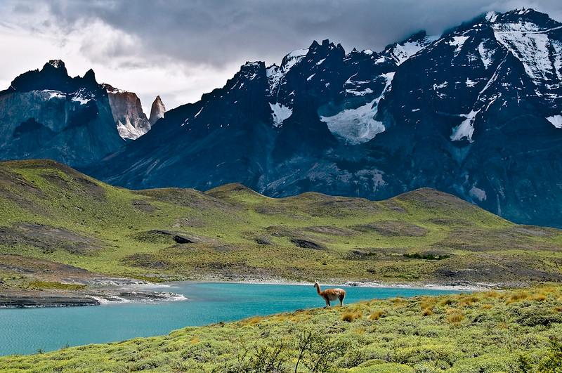 A Guanaco surveys the majestic landscape.