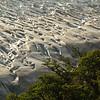 Glaciar Grey with rainforest around