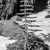 76  G Small Tree BW V