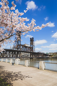Cheery Blossom, Portland, Oregon