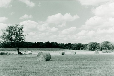 B&W film photo of hay bales on Boutwell Lane East just outside of Temple, Texas. The photograph was hand printed on semi-mat fiber paper and then toned in selenium.